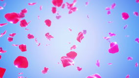 玫瑰花瓣落(圈) 影视素材