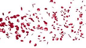 玫瑰花瓣飞行微粒,反对白色,储蓄英尺长度 向量例证