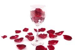 玫瑰花瓣,在白色背景隔绝的酒杯 免版税库存照片