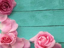 玫瑰花瓣,花背景 库存照片