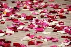 玫瑰花瓣 图库摄影