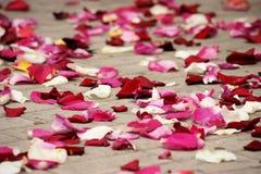 玫瑰花瓣 免版税库存照片
