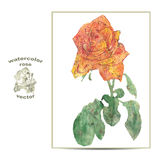 玫瑰花的传染媒介例证 免版税库存图片