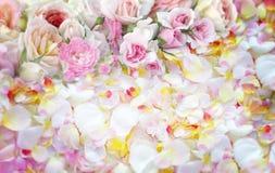 玫瑰花背景 免版税库存照片