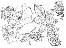 玫瑰花蕾线上色vektor的线 免版税库存照片