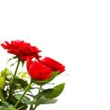 玫瑰花边界 免版税库存照片
