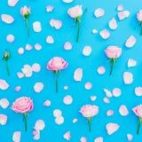 玫瑰芽和瓣的花卉样式在蓝色背景 平的位置,顶视图 桃红色玫瑰花纹理 红色上升了 免版税库存图片