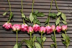 玫瑰范围 库存照片