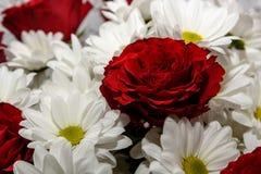 玫瑰菊花开花花束红色 库存照片
