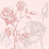 玫瑰葡萄酒 图库摄影