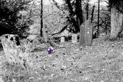 玫瑰被隔绝的花束在公墓的 库存照片