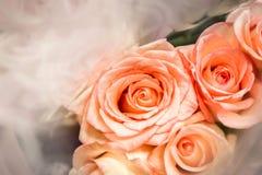 玫瑰,模糊在纹理软的迷离的甜颜色玫瑰与淡色葡萄酒减速火箭的样式的背景的 免版税图库摄影