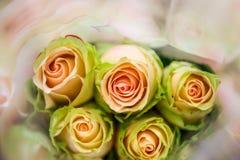 玫瑰,模糊在纹理软的迷离的甜颜色玫瑰与淡色葡萄酒减速火箭的样式的背景的 库存照片