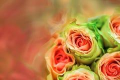 玫瑰,模糊在纹理软的迷离的甜颜色玫瑰与淡色葡萄酒减速火箭的样式的背景的 免版税库存图片