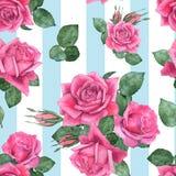玫瑰8 无缝花卉的模式 免版税库存图片