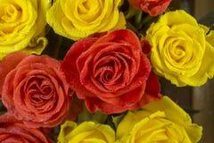 玫瑰-黄色和红色 库存照片