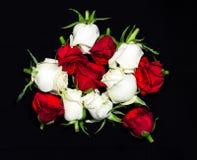 玫瑰 免版税库存照片