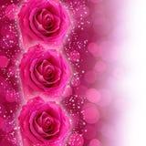 玫瑰rtars 向量例证