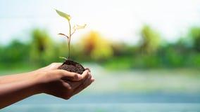 环境世界地球日在生长幼木的树的手上 在自然领域草的Bokeh绿色背景男性手藏品树 库存图片