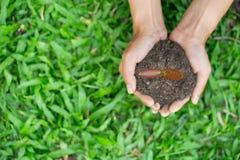 环境世界地球日,拿着在自然领域草,森林保护,生态概念的年轻女人的手树 免版税库存图片