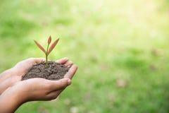 环境世界地球日,树在人的手上增长 自然绿色bokeh背景,生态概念 库存图片