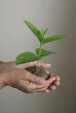 环境保存主题 免版税库存图片