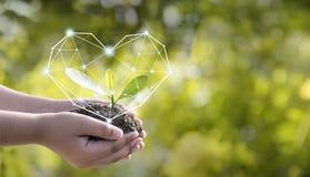 环境在树的手上种植了幼木受心脏的保护 绿色背景,bokeh,在草原的树, 免版税库存照片