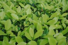 环境概念,绿色叶子纹理 库存照片