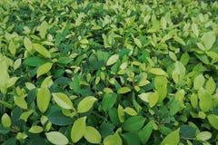 环境概念,绿色叶子纹理 库存图片