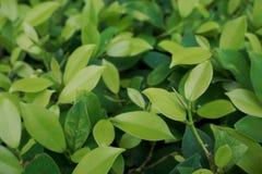 环境概念,绿色叶子纹理 免版税库存照片