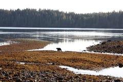 环境海岛温哥华 库存图片