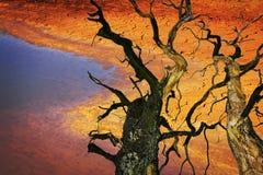环境破坏气候变化 免版税库存图片