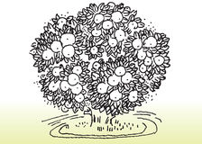 环境结构树 图库摄影