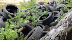 环境罪行-恶霸在森林投掷在非法轮胎转储的一个轮胎 人憎恶的态度环境的 影视素材
