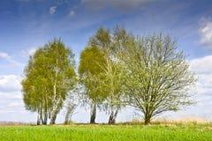 环境美化与一些朵树和云彩在蓝天 免版税库存照片