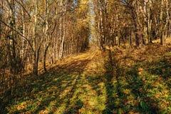 环境美化与与树的秋天木头并且掠过在草原小山 免版税库存图片