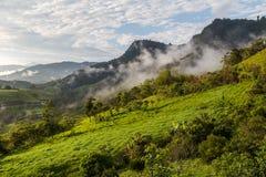 环境美化与云彩,密林,山并且播种安地斯, Ecuad 库存图片