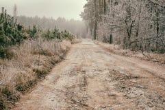 环境美化与土路在用树冰盖的有薄雾的森林里 免版税库存照片