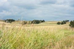 环境美化与在小山的罕见的树,在前景的干草 免版税库存图片
