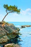 环境美化与在海的一棵偏僻的杉树 库存照片