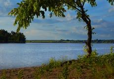环境美化与在湖的树在夏日 免版税库存图片