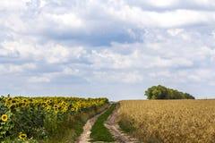 环境美化与在草甸之间的土路及早在春天 免版税库存照片