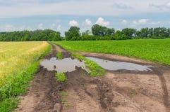 环境美化与在麦子和大豆领域之间的路 免版税库存照片