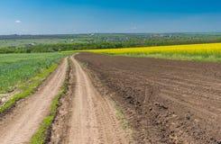 环境美化与在麦子和开花的强奸农业领域之间的一条土路在中央乌克兰 免版税库存照片