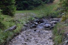 环境美化与岩石、石头和流经有瀑布的山河杉树森林在秋天时间在雨前 免版税图库摄影