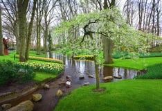 环境美化与开花的树、美丽的花和水小河 库存照片