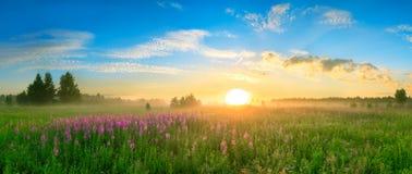 环境美化与日出,进展的草甸全景 免版税库存照片