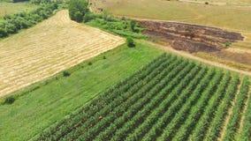 环境美化与果树园,麦田,空中录影 股票视频