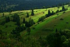 环境美化与森林和领域在斯洛伐克/波兰界限 库存图片