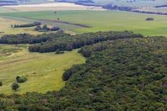 环境美化与母牛,湖,从山Toratau的森林视图 免版税库存图片